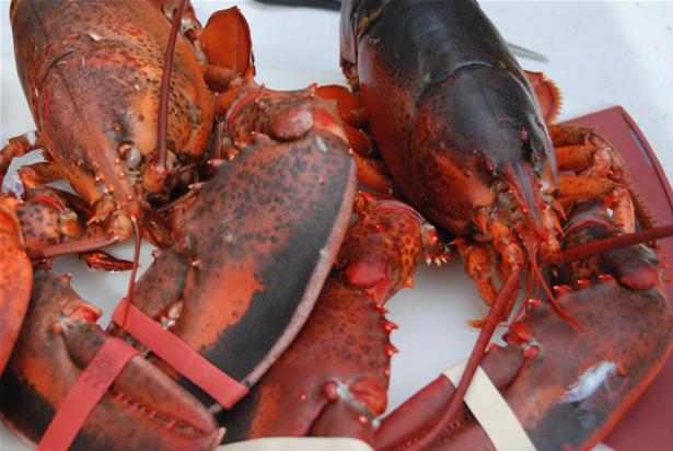 lobster0099